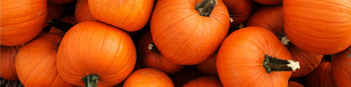 All Things Pumpkin 1200x300
